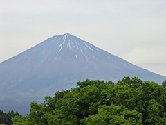 050521honjin_fuji